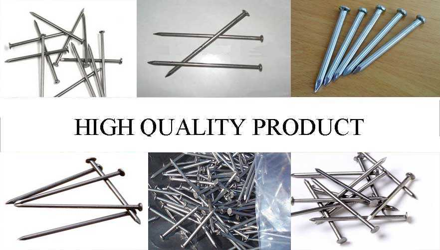 High quality product of Galvanized concrete steel nails/bulk nails factory