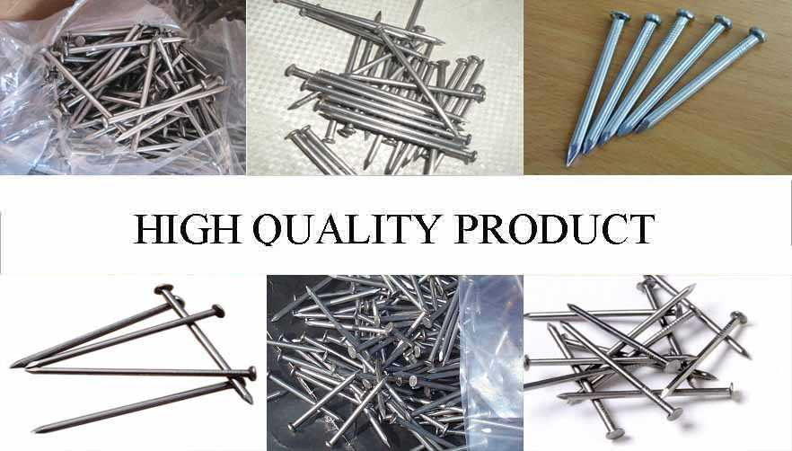 High qualtiy product of Galvanized Steel Nails